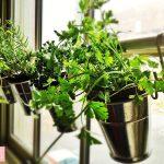 ۱۵ باغچه خانگی برای فضاهای داخلی