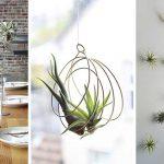 ایده های خلاقانه گیاهان هوازی در خانه