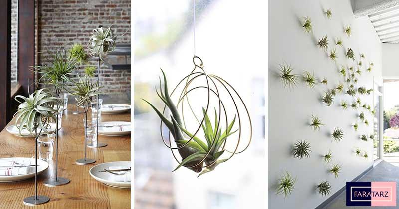 گیاهان هوازی خانگی