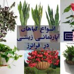 ۱۳ نوع از محبوب ترین انواع گیاهان آپارتمانی زینتی