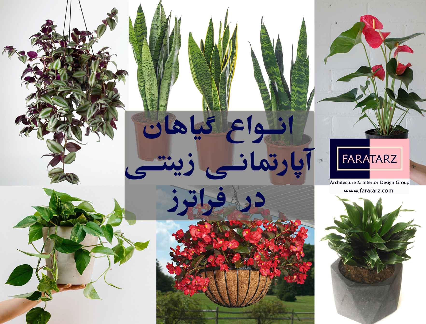 محبوب ترین انواع گیاهان آپارتمانی زینتی