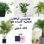 10 نوع از برترین گیاهان تصفیه کننده هوا فنگ شویی