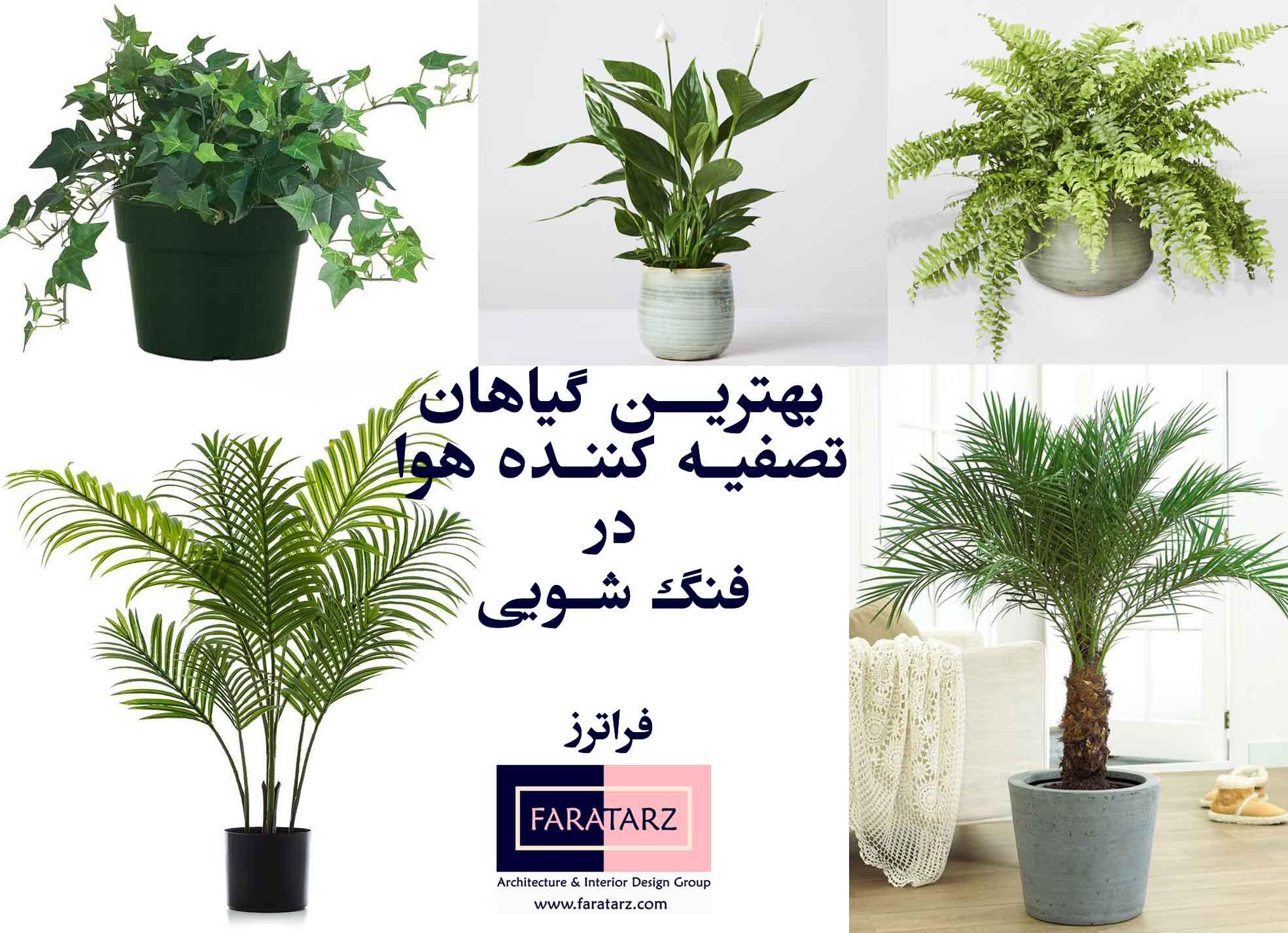 تصاویر گیاهان تصفیه کننده هوا در فنگ شویی